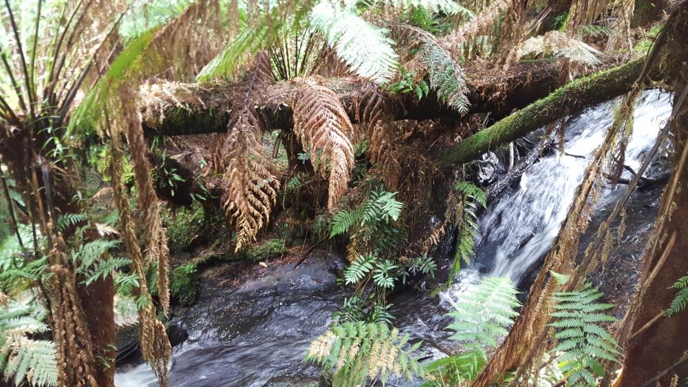 Anne's Cascade