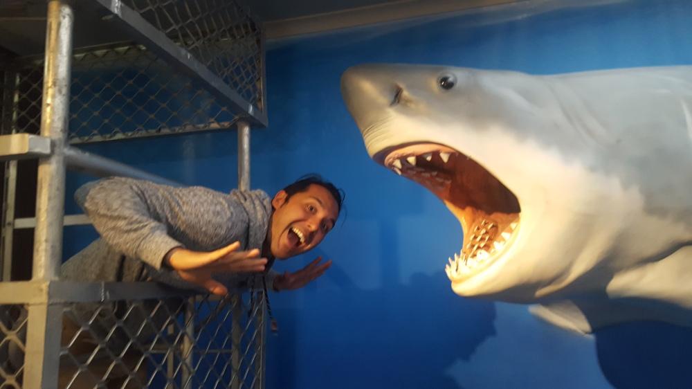 cage requin Port Lincoln