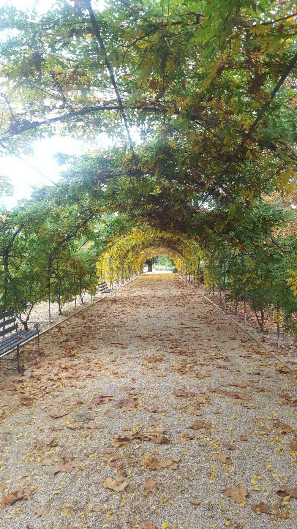 Jardin botanique arche
