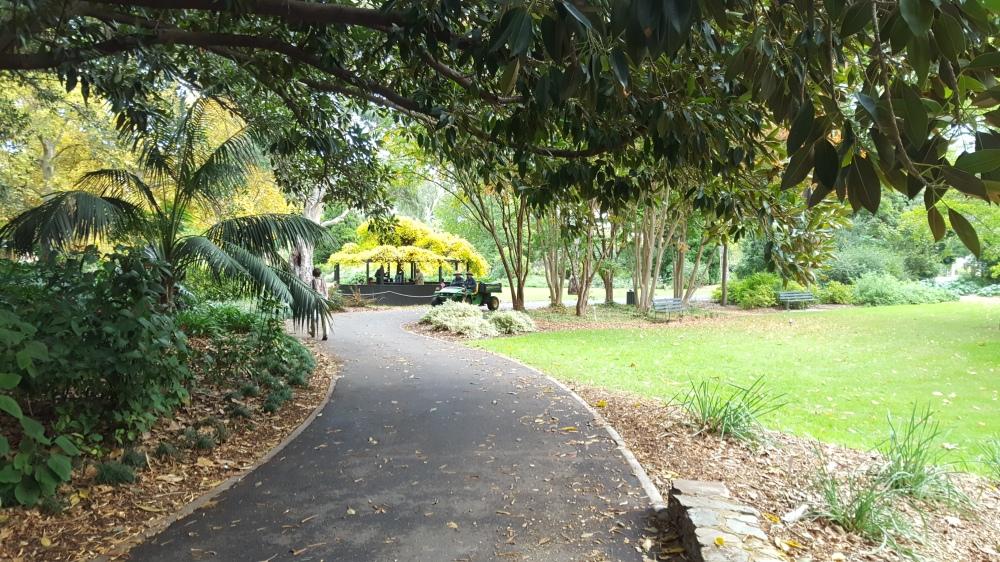 Allées jardin botanique