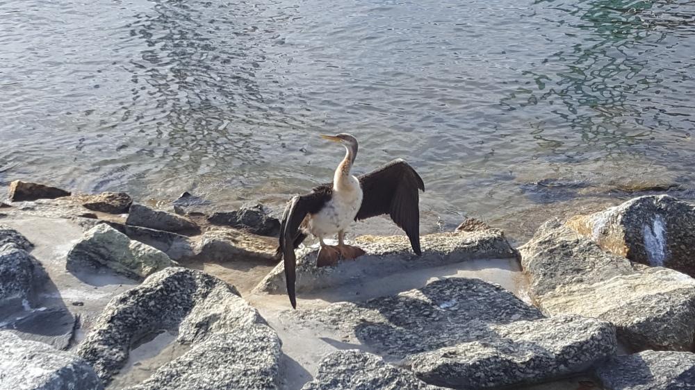 Oiseau bronzage