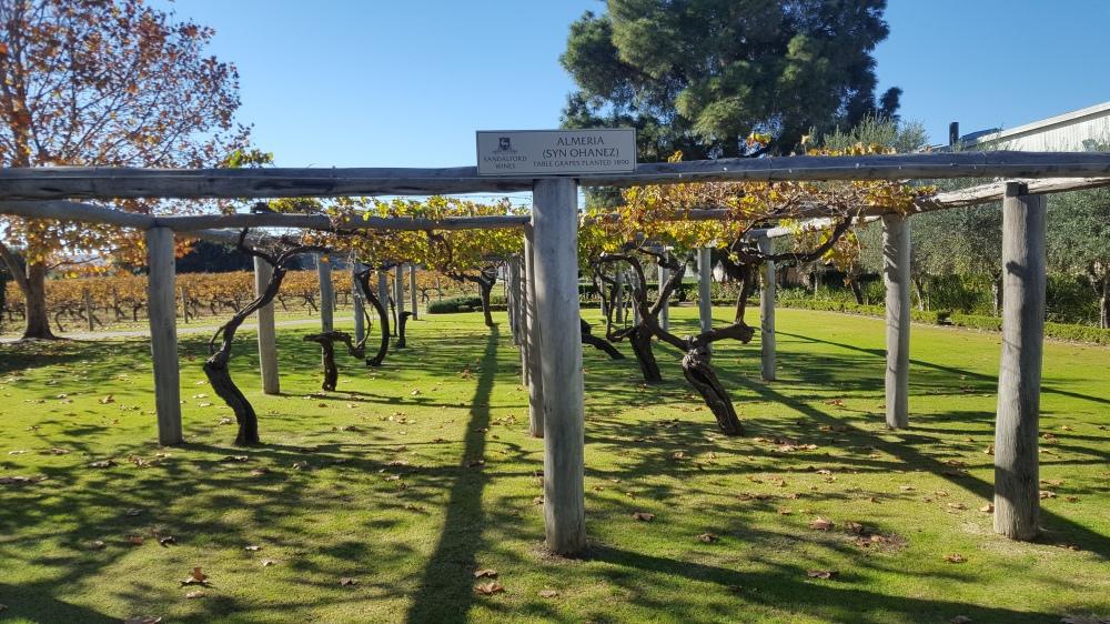 Sandalford Wines vignes