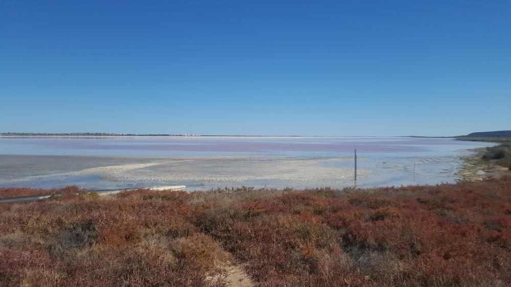 Pink Lake Hutt Lagoon