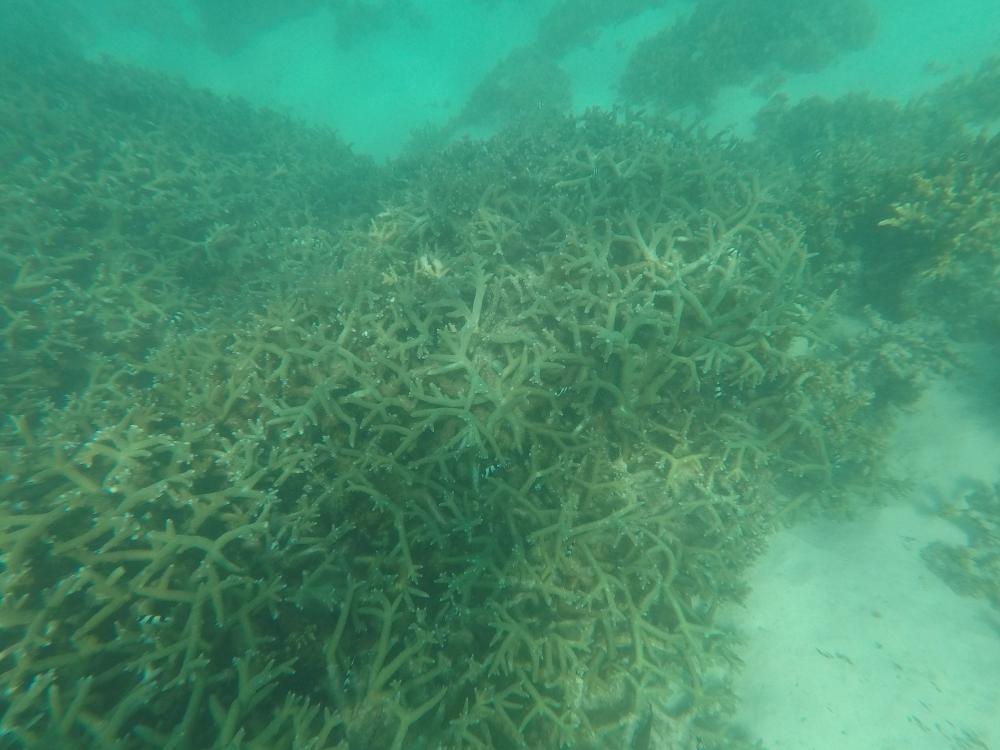 Corail mort