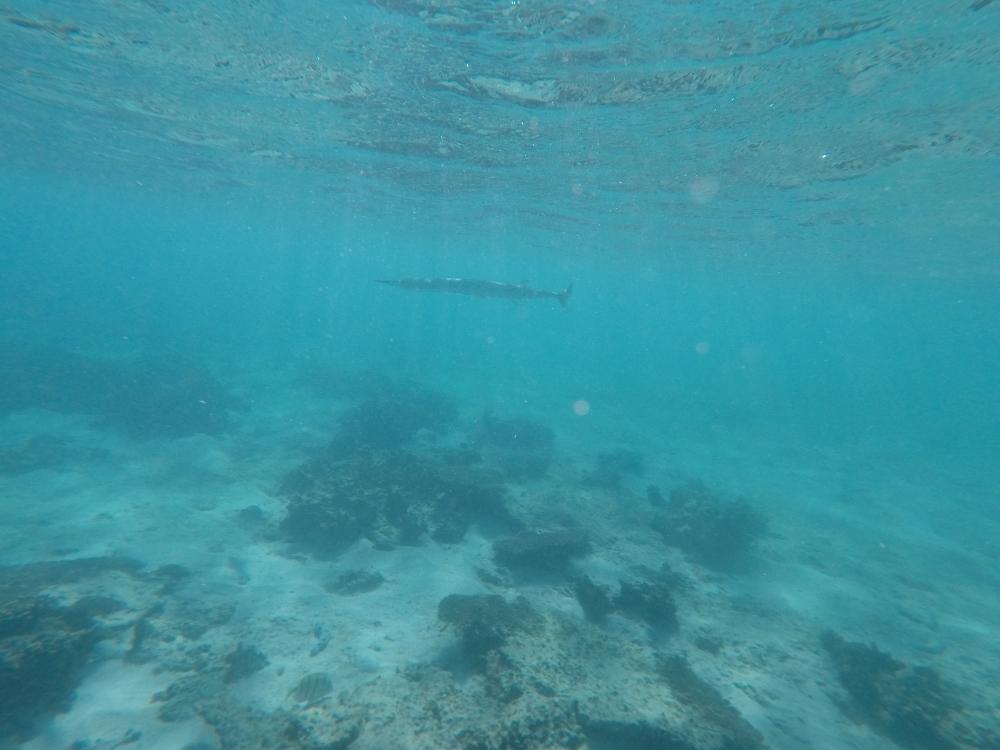 Poisson requin